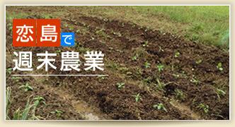 恋島(古宇利島)で週末農業